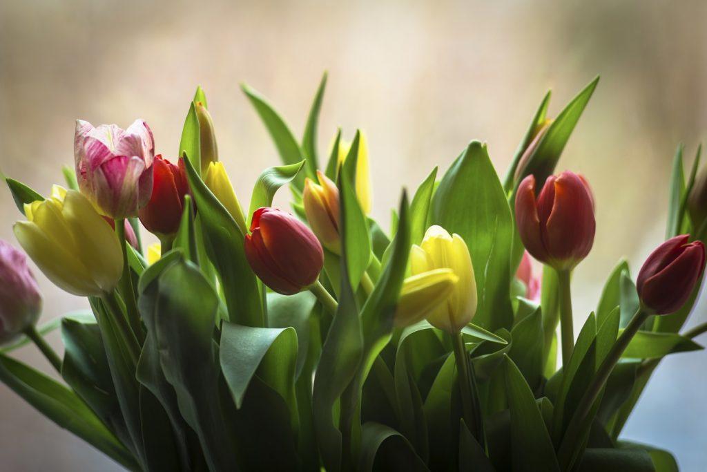 sauna stockholm tulip thai